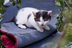 Homeless little kitten Royalty Free Stock Photo