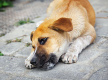 Homeless little puppy gnawing a bone. Outdoors Royalty Free Stock Photos