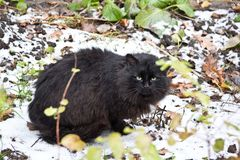Homeless lonely black fat furry cat in winter Royalty Free Stock Photography