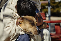 Homeless Man with Dog on Bench Stock Photos