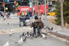 Homeless man feeding pigeons. New York, US, Dec 26,2016: homeless man feeding pigeons Stock Image