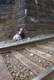 Homeless Man Living Under Railroad Bridge Royalty Free Stock Photography