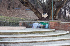 Homeless man sleeping peacefully on wooden bench Stock Photos