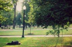 Homeless Man Sleeps in Park in Boston Royalty Free Stock Photo
