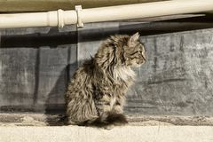 A homeless man spotted a cat sitting in profile against the window and pipe. A homeless man spotted a cat sitting in profile against the window and the pipe on a royalty free stock photography