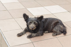 Homeless miserable dog lying on the floor. Pets stock image