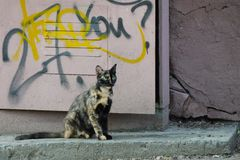 Homeless mixed-color cat with green eyes is sitting in the street stock photos