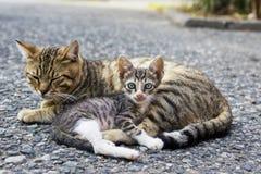 Mom cat and kitten. Homeless mom cat and weak small kitten Stock Photo