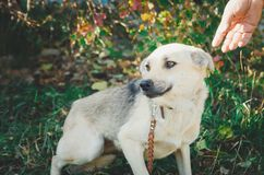 Homeless mongrel dog waiting for a new owner stock photo