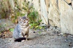 Homeless mongrel gray kitten sitting on the street stock images