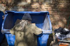 Homeless old man digging in trash can. Royalty Free Stock Image