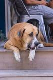 homeless Perro perdido Una cabeza de un perro Imagenes de archivo