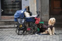 Homeless person's possessions and dogs Stock Images
