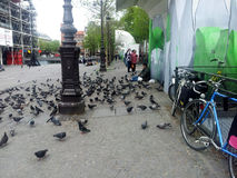 Homeless pigeons Royalty Free Stock Image