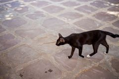 Homeless and poor black cat. Finding food, very thin cat stock images