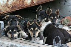 Homeless puppies. Under rusty garage Royalty Free Stock Photos