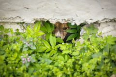 Homeless puppies hide from people. Dogs look from their caches. Street dogs hid in the grass. Stock Images