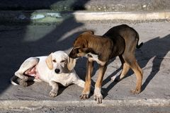 Homeless puppies playing on the pavement royalty free stock images