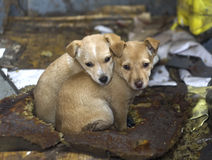 Homeless puppies Royalty Free Stock Photos