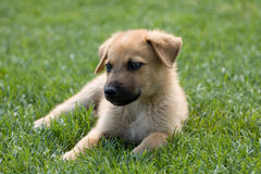 Homeless puppy Royalty Free Stock Photography