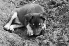 Homeless puppy royalty free stock images