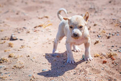 Homeless puppy on the beach Royalty Free Stock Photos