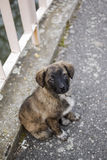Homeless puppy Royalty Free Stock Photos
