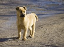 Homeless puppy on a dirty street stock photo
