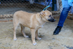 Homeless puppy in shelter Royalty Free Stock Image