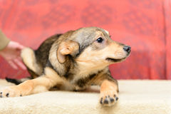 Homeless puppy in shelter Stock Image
