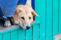 Homeless puppy in a shelter for dogs Royalty Free Stock Images