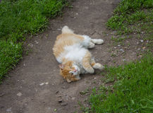 Homeless red cat lying in the dust Stock Images