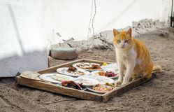 Homeless red cat next to plates of food on the street in Egypt Dahab South Sinai. Homeless red cat next to plates of food on the street royalty free stock photography