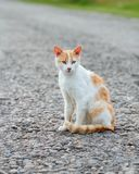 Homeless red cat sitting on the warm asphalt road. Stray cat attentively looks forward.  royalty free stock photo