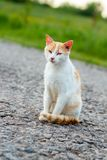 Homeless red cat sitting on the warm asphalt road. A stray cat looking at the camera and squinting.  Royalty Free Stock Images