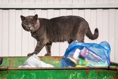 A homeless sad cat. On the garbage can Stock Image