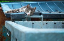 A homeless sad cat laying on the lid of a garbage can Royalty Free Stock Photos
