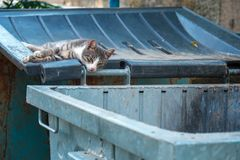 A homeless sad cat laying on the lid of a garbage can Stock Photos