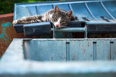 A homeless sad cat laying on the lid of a garbage can on a summer day Royalty Free Stock Images