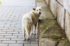 Homeless sad dog Stock Image