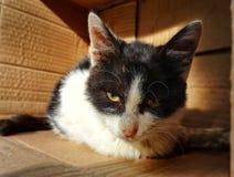 Sad stray cat. Homeless and sad stray cat in the paper box royalty free stock photography