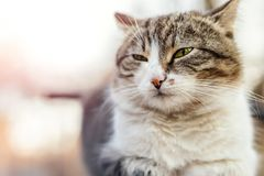 Homeless satisfied street cat relaxing and dreaming on wooden bench in city park outdoor. Bliss and tranquil animal lying. Outdoors on bright summer day in stock photography