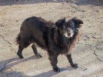 Homeless shaggy dog Royalty Free Stock Image