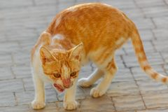 Homeless sick cat Royalty Free Stock Photography