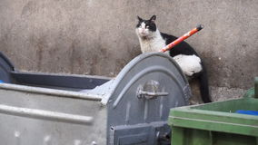 Homeless stray cat goes along dirty garbage container - Closeup stock footage