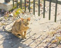 Homeless, stray cat sitting by the fence and stares. Cat with amazing eyes Stock Images