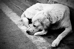 Homeless stray dog Stock Photos