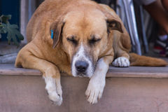 Homeless. Stray dog. A head of a dog. Royalty Free Stock Photography