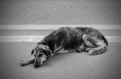 Homeless stray dog Royalty Free Stock Photo