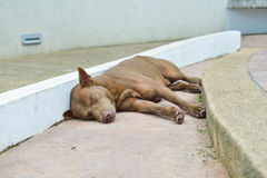Homeless stray dog on street Royalty Free Stock Photo